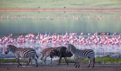 aluz-kenia-en-semana-santa-7633